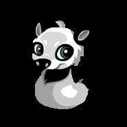 Image of Panda Baby